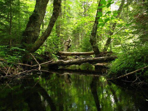 stream, forest, creek
